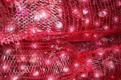 cebula czerwona