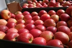 Jabłko Decosta 2