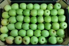 Jabłko Golden 2