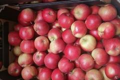 Jabłko Idared 2 (2)