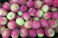 Jabłko Paulared