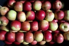 jabłko Idared 2