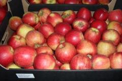 jabłko jonagored 2