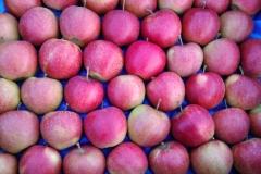 produkt jabłko na wytłoczce